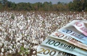 cotton-euro
